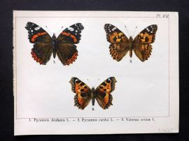 Joanny Martin 1902 Antique Butterfly Print 07